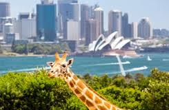 Position: Sydney Law Firm Looking For KM Lawyer