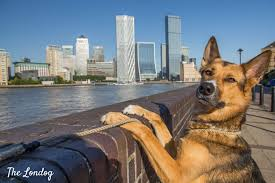 London Law Firm Will Pay You £30,000 A Year To Walk Their Dog