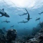 A Coronavirus Vaccine Could Kill Half A Million Sharks, Conservationists Warn